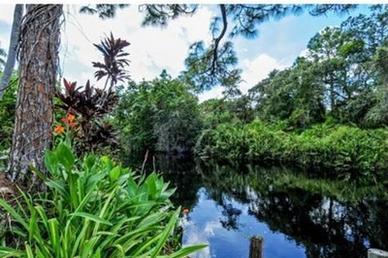 Bonita Springs, Florida, Carneys Havanese Haven, Purebred Havanese Puppies
