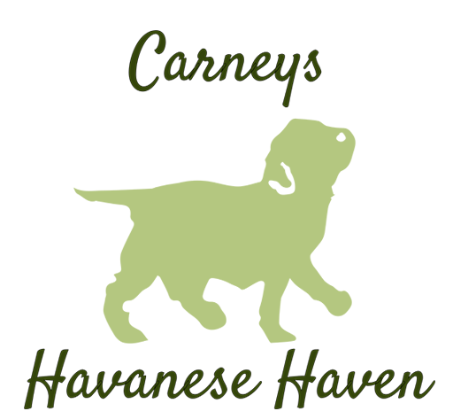 Carneys Havanese Haven