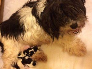 Maxi's pups